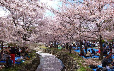 Test Seleksi Peserta Pelatihan Bahasa Jepang